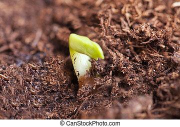 germination.
