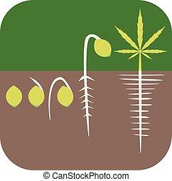 Germination concept - Marijuana growing concept. Germination...