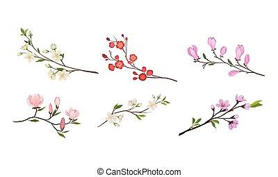germogli, rami, vettore, azzurramento, albero, tenero, set, ramoscelli, fiore