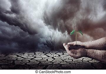 germoglio, albero, arido, mano, ambiente, presa a terra, deserto