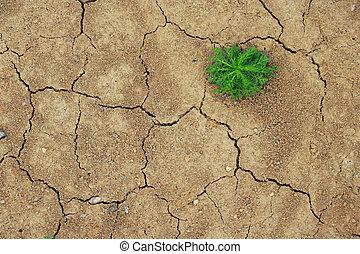 germoglio, asciutto, suolo