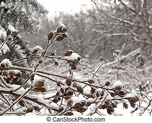 geschaffen, einfrieren, schnee, regen, hintergrund, eiszapfen, zweig