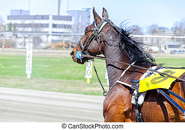 geschirr, racing., rennsport, pferd, bewegung