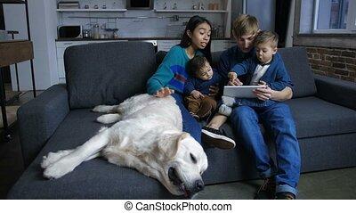 gestion réseau, tablette, famille, pc, divers, chiot