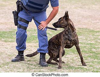 gestionnaire, fâché, chien, police
