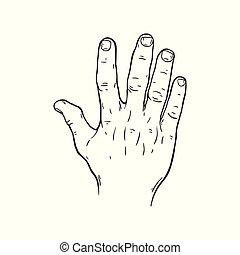 gesto mano, cinco, dedos