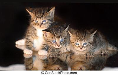 gestreift, Katze, drei, babykatzen