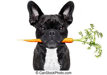 gesundes essen, hund