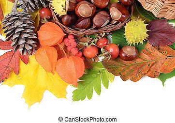 gesztenyék, zöld, elszigetelt, ősz, háttér, fehér