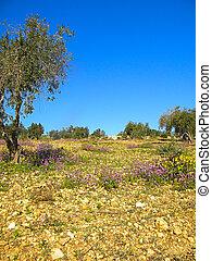 Gethsemane Garden On Mount Of Olives, Jerusalem - The...