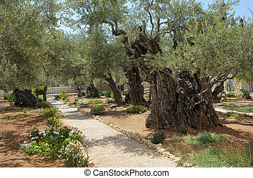 gethsemane, jardín