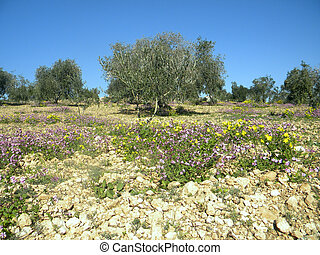 Gethsemane - The Gethsemane Garden located at the foot of...