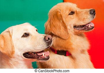 getraind, honden, voor, geassisteerd, therapie