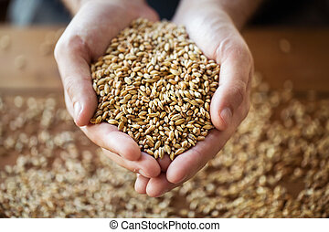 getreide getreide, landwirte, malz, halten hände, mann, oder