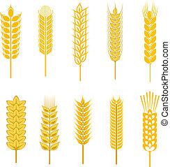getreide, symbole