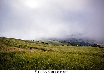 Getreidefeld im Nebel
