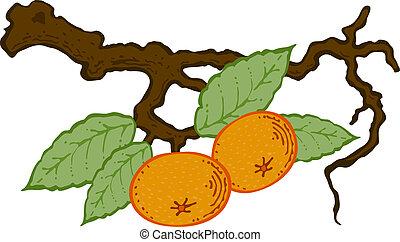 getrokken, bladeren, mandarijn, tak