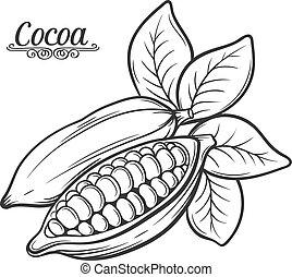 getrokken, hand, cacao, bean.