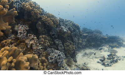 Getting past a healthy coral reef