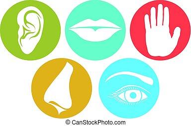 geur, (nose, proeven, lippen, hand), beroeren, senses:, 5, in het oog krijgen, oor, gehoor, oog