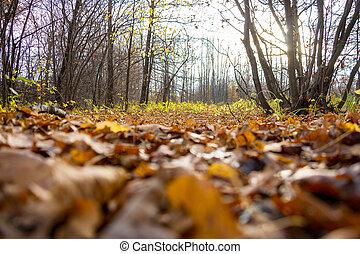 gevallen, autumn leaves, in, de, bos