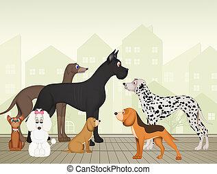 gevarieerd, honden, fokken