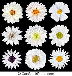 gevarieerd, selectie, van, witte bloemen, vrijstaand, op, black