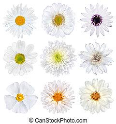 gevarieerd, selectie, van, witte bloemen, vrijstaand