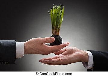 geven, zakenman, sapling, businessperson