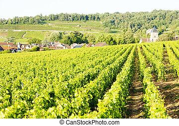 gevrey-chambertin, nuits, de, francia, viñas, cote, borgoña