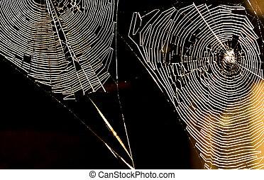 gewebe, spinnen