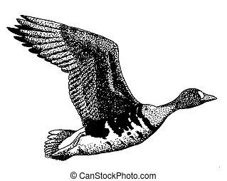geweldiggere wite-fronted goose