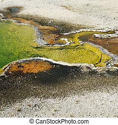 Geyser basin in Yellowstone.