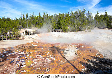 Geyser eruption in the Norris basin of the Yellowstone national park