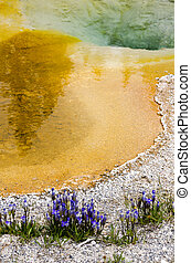 Geyser in Yellowstone with flowers