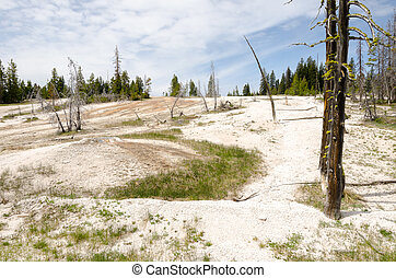 Geyser Basin in Yellowstone