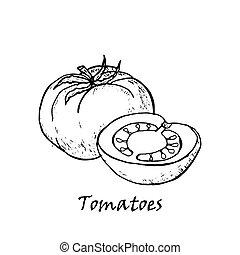 gezeichnet, blatt, tomaten, abbildung, hand