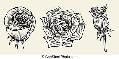 stock illustration von rosen hand drawn bleistift bleistift rosen csp44470105 suche. Black Bedroom Furniture Sets. Home Design Ideas