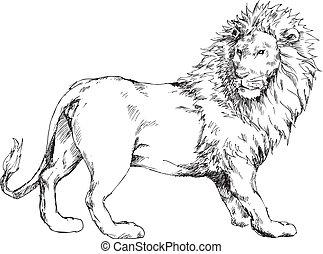 gezeichnet, hand, löwe