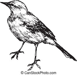gezeichnet, vogel, hand