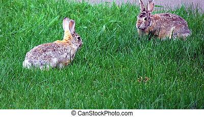 gezicht, konijnen, ervandoor.