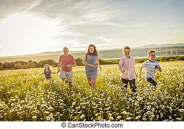gezin, akker, ondergaande zon , madeliefje, plezier, hebben, vrolijke