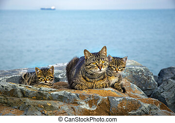 gezin, katjes, rotsen, poezen, zee, moeder