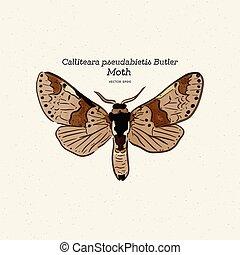 gezin, moth, calliteara, lakeien, pseudabietis, erebidae.