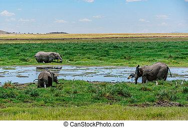 gezin, van, olifanten, in, kenia, afrika