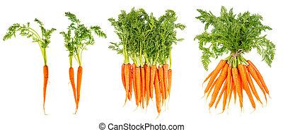 gezonde , wortels, leaves., rauwe, groene, voedingsmiddelen, vegetable., fris