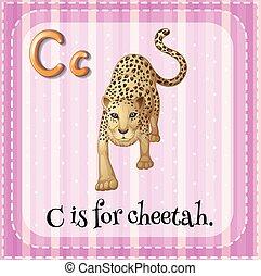 ghepardo, c, lettera, flashcard