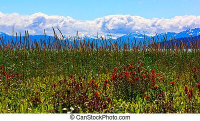 ghiacciaio, nazionale, alaska, baia, parco, whild, fiori