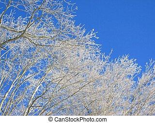 ghiacciato, albero