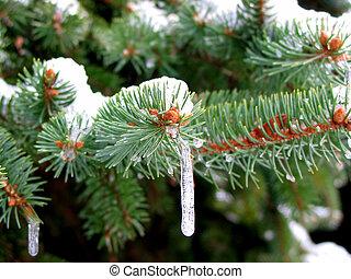 ghiaccioli, su, il, albero abete